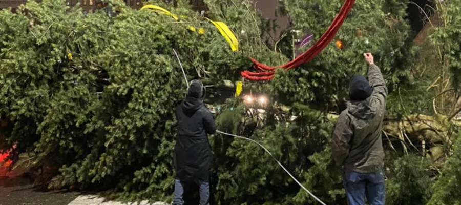 Here's How to Recycle Your Christmas Tree in Philly