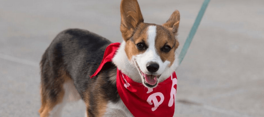 Phillies Salute to Champions and Adoptable Pets & Pet