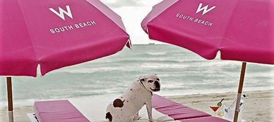Miami Beach Pet-Friendly Hotels and Perks